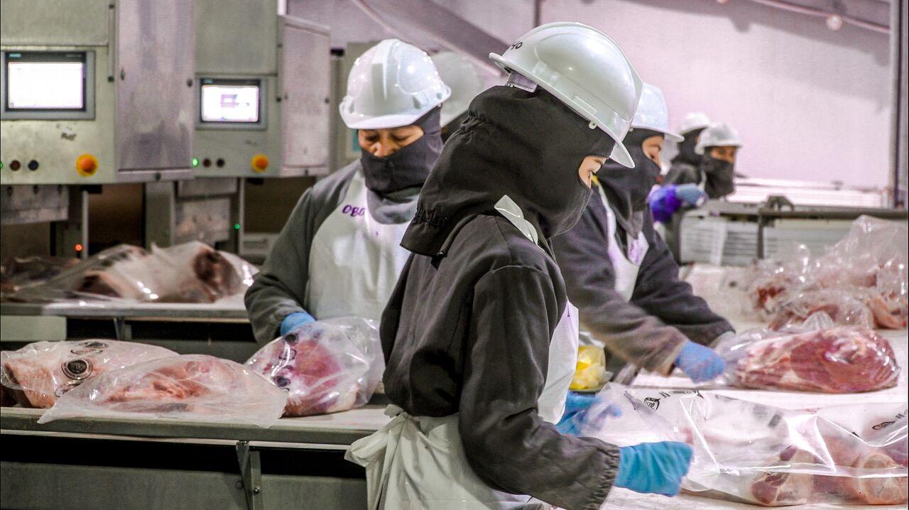 b35a9d8b7b8c1 Los productores mexicanos podrán exportar cárnicos de res y de cerdo a  Singapur.